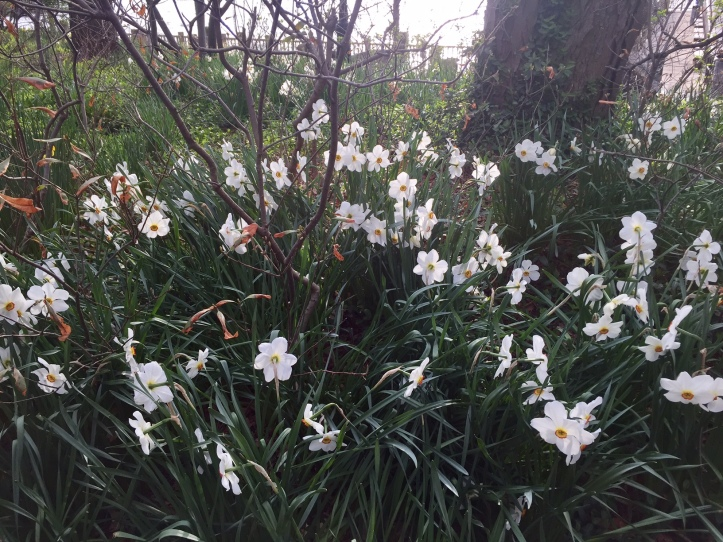 DaffodilRiver